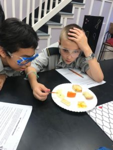 Middle Schoolers testing for organic compounds